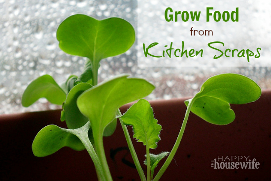Grow_Food_from_Kitchen_Scraps