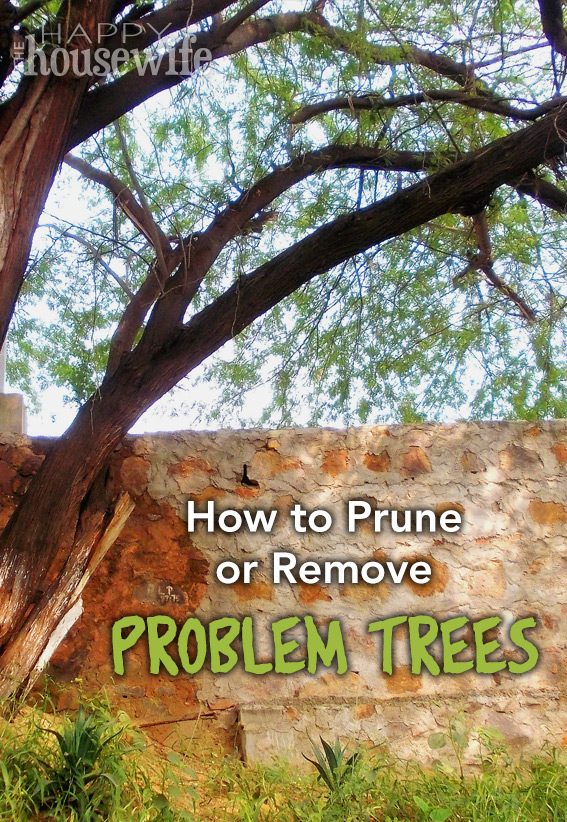 How to Prune or Remove Problem Trees at The Happy Housewife