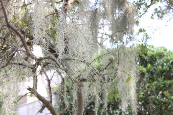 sad_tree