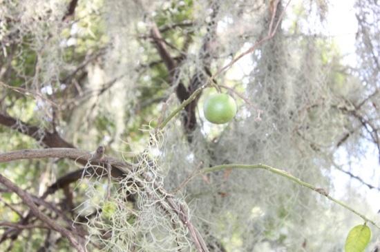sad_tree_fruit