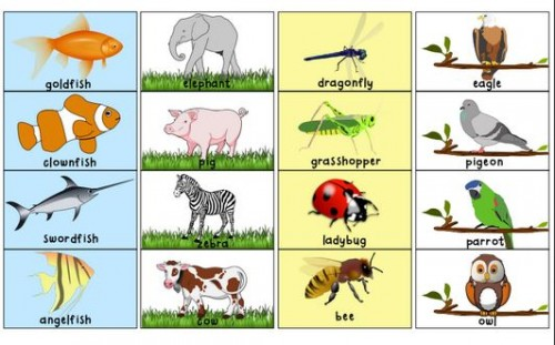 coloring pages animal classification lesson - photo#32