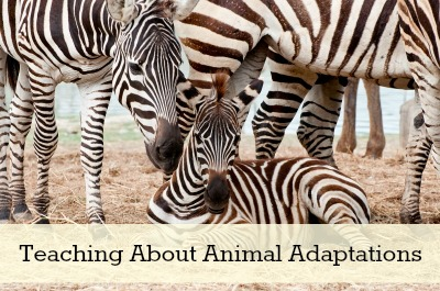 Teaching About Animal Adaptations