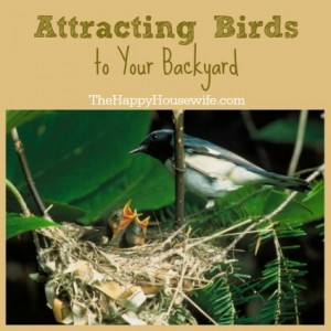 Attracting Birds To Your Backyard - The Happy Housewife ...