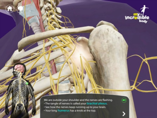 Virtual Anatomy Study Resources at The Happy Housewife