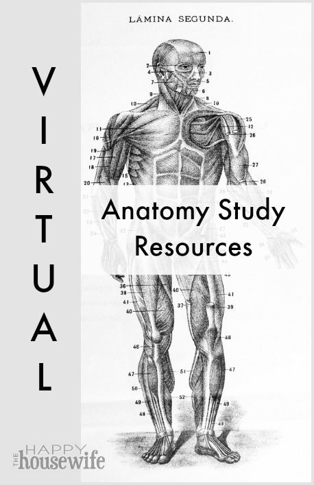 anatomy is the study of