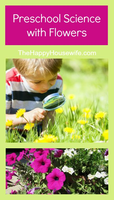 Preschool Science with Flowers at The Happy Housewife