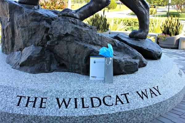jwu-wildcat