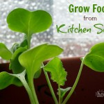 Grow Food from Kitchen Scraps