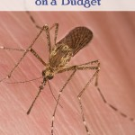 Mosquito Control on a Budget