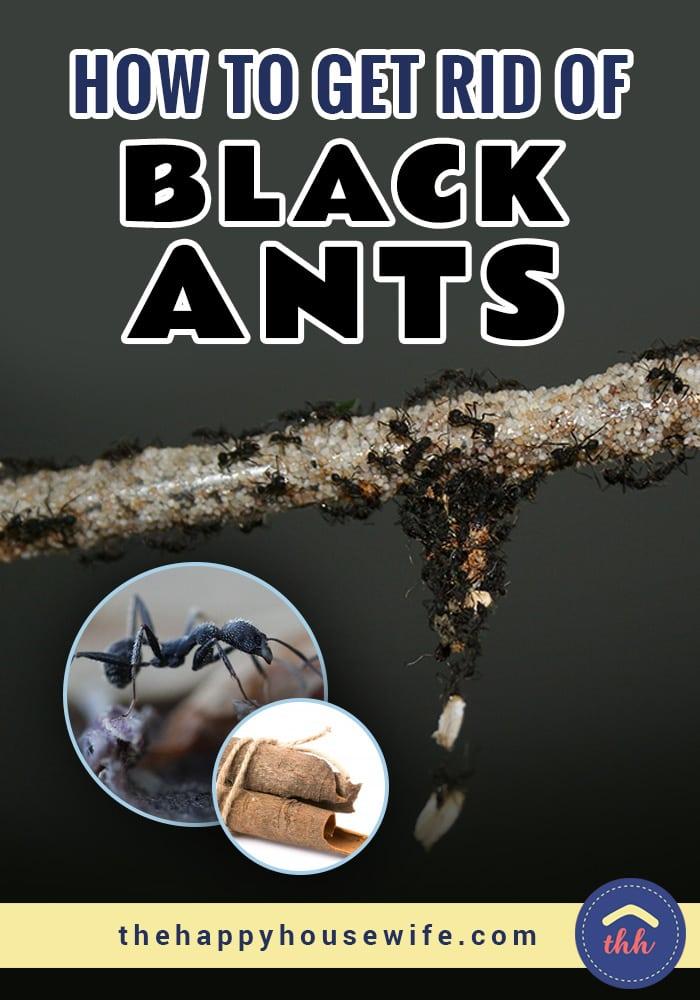 Rid of piss ants sex