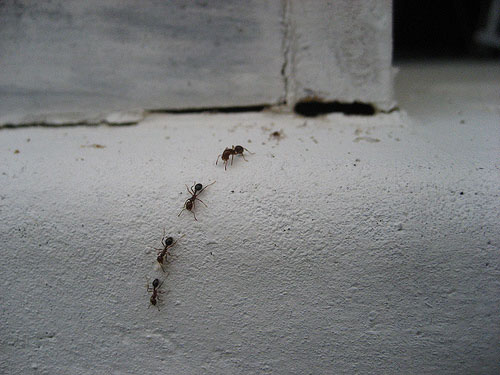 Before calling the exterminator  save yourself money and avoid chemicals  with this simple  three. How to Get Rid of Ants with Three Ingredients   The Happy