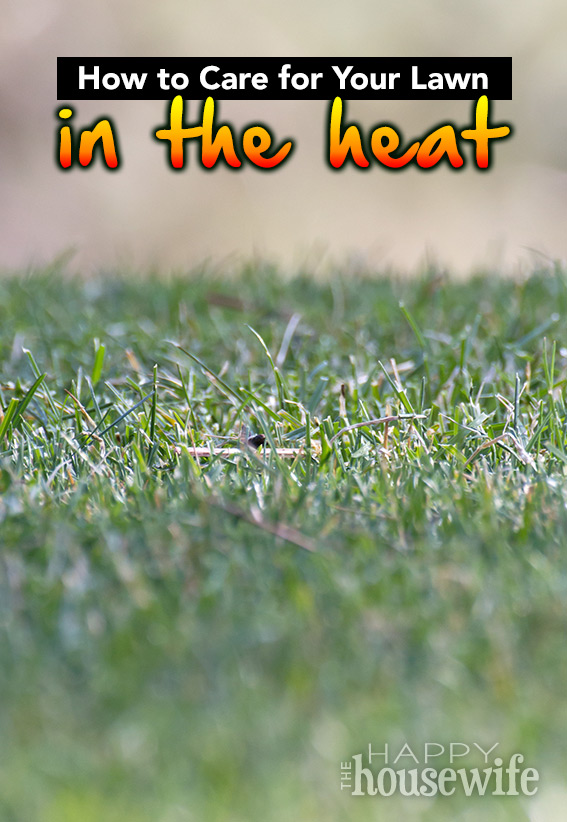 How To Care For Your Lawn In The Heat The Happy