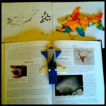 hands-on shark ideas