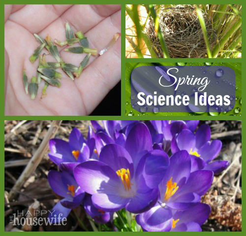 Spring Science Ideas | The Happy Housewife