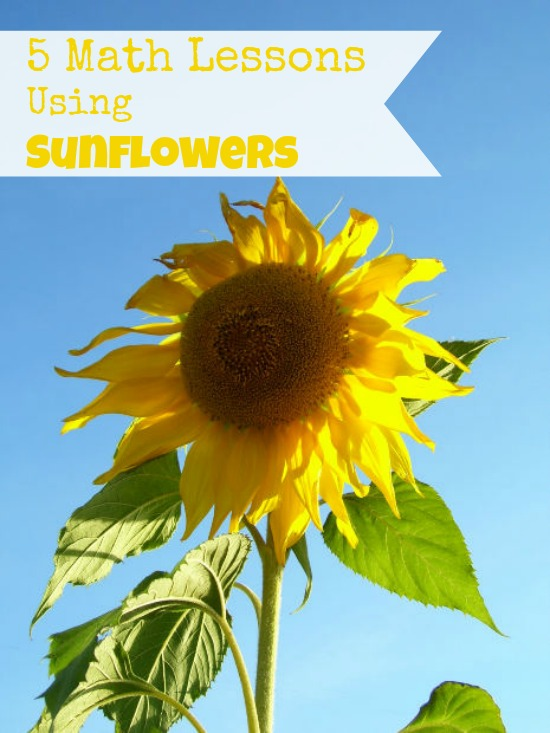 5 Math Lessons Using Sunflowers | The Happy Housewife