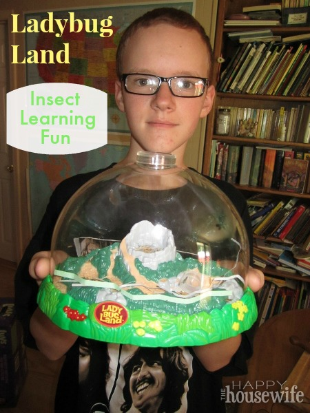 Insect Lore Ladybug Land Makes Learning Fun | The Happy Housewife