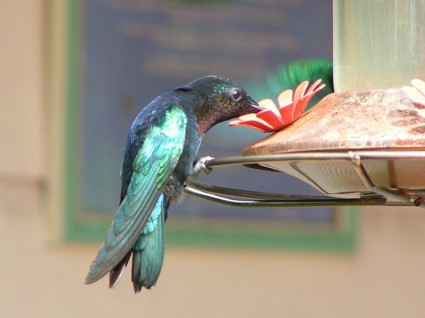 Attracting Birds To Your Backyard | The Happy Housewife