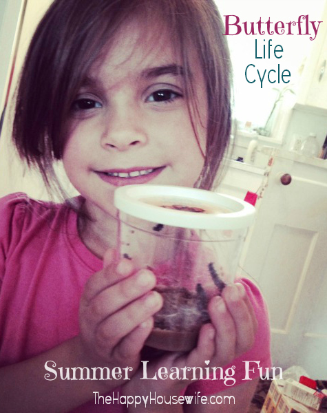 Butterfly Life Cycle Learning Fun | The Happy Housewife