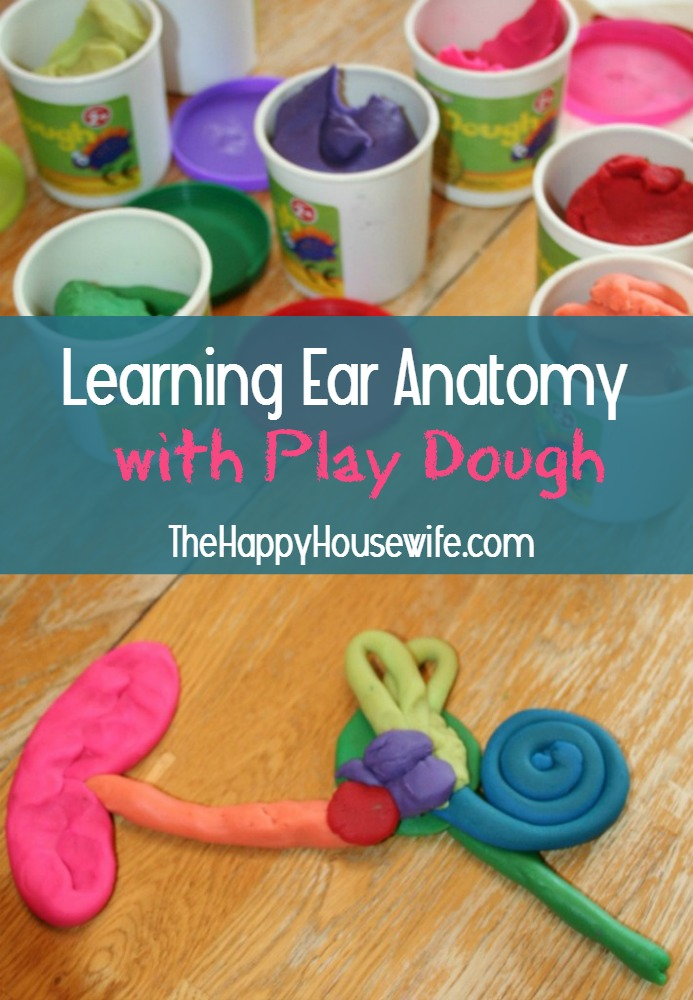 Learning Ear Anatomy with Play Dough - The Happy Housewife™ :: Home ...