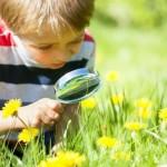 Preschool Science With Flowers