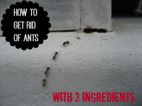 top posts of 2014 apparently you have an ant problem the happy housewife real life. Black Bedroom Furniture Sets. Home Design Ideas